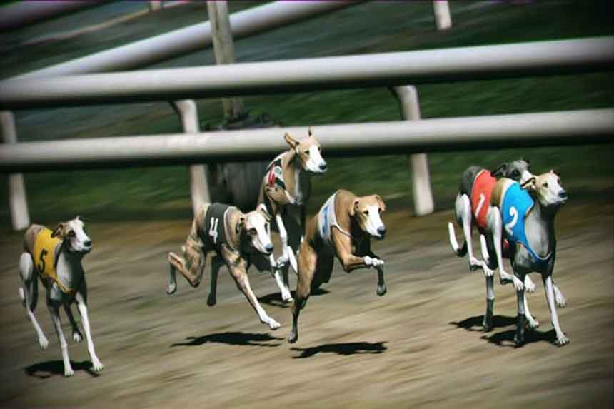 How to Play Virtual Dog Race Betting At GogbetSG